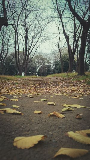 My Best Photo 2015 Xperia Z4 Autumn Autumn Leaves No People Ultimate Japan Japan Streetphotography Autumn Mood