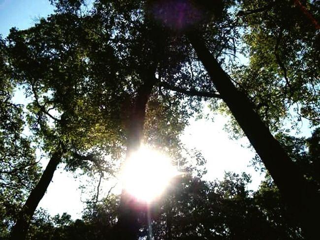 Foreal Woods Intothewoods Trees Trees And Sky Green Sun Sunlight Sunshine Brown Light Wild Trip Camping Arboles Nature Naturaleza Salvaje Verde Sol Shinning Brillante Soleado