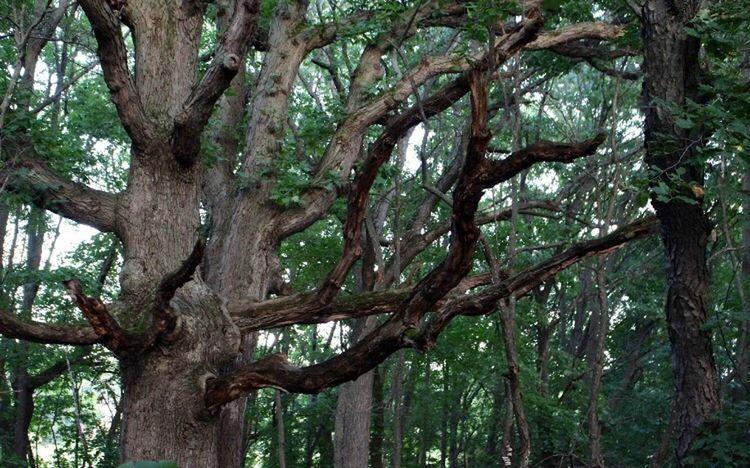 Wicked Tree Unique Dark