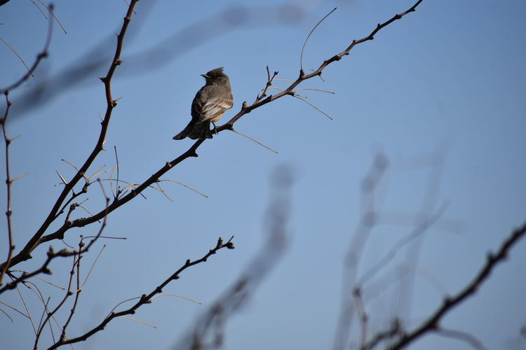 Low angle view of bird perching on twig