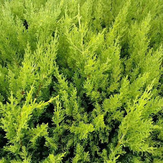 Green Natural Life