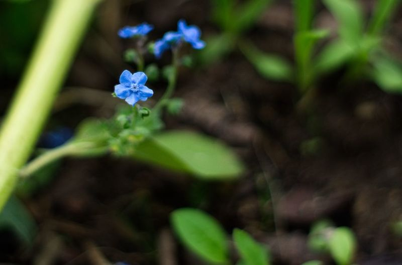 Plant Flower Growth Flowering Plant Fragility Vulnerability  Freshness Plant Part Nature Outdoors No People Day Green Color Selective Focus Beauty In Nature Close-up Leaf