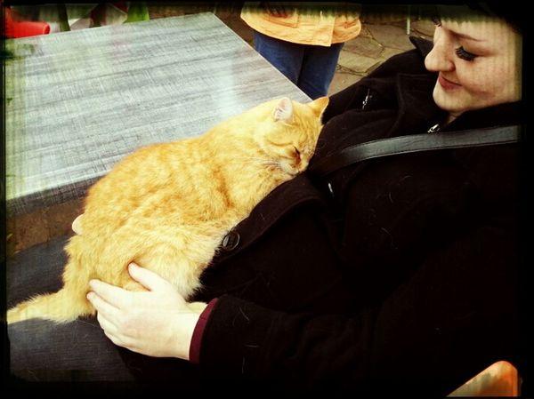 Catsoneyeem Animallove Relaxing