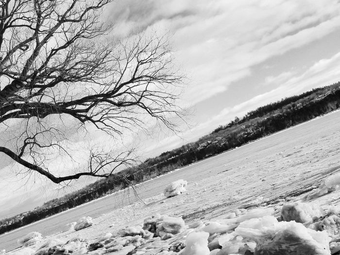 Tree Winter Snow Plant Cold Temperature Tranquility Beauty In Nature Nature Sky Scenics - Nature Outdoors Tranquil Scene Day Environment No People Landscape Land Cloud - Sky Non-urban Scene Bare Tree