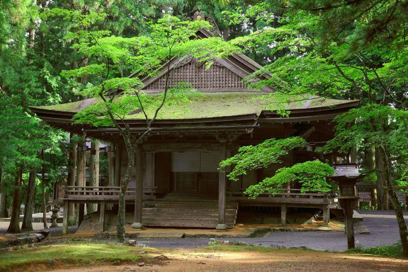 Kouyasan Japan Kouyasan Japan Japan Photography Koyasan Temple Old Buildings Trees Green Trip