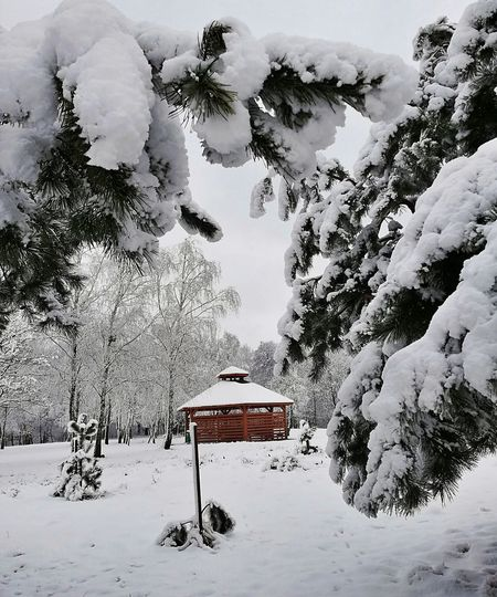Snow covered plants and trees by building