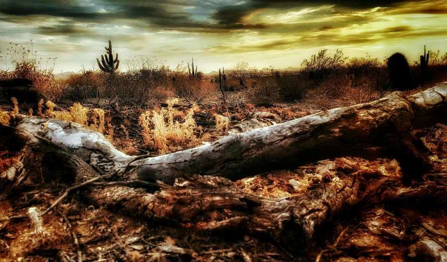 A milions tomorrows but one yesterday Check This Out The Great Outdoors With Adobe Desert Landscape Nature Eye4photography  EyeEm Nature Lover Hikingadventures AriZona♡ Beauty In Nature Landscape EyeEm Best Edits Snapseed Im A Rookie Klique Klique