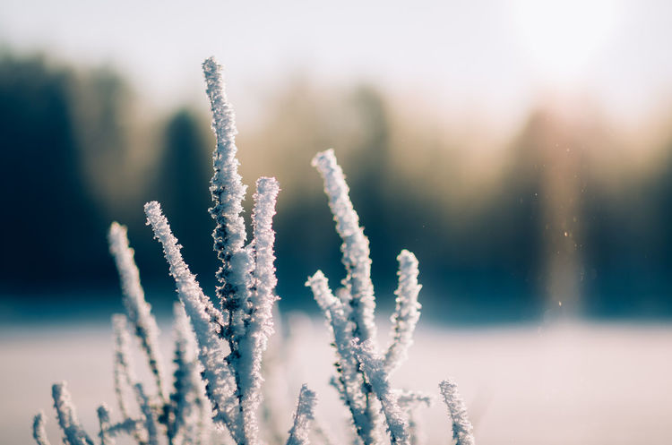 Ice Crystals Nature Beauty In Nature Winter Scenics Outdoors Cold Temperature Close-up Idyllic Frozen Morning Light Klaquax@home Eye4photography  Frosty Morning EyeEm Nature Lover Shallow Depth Of Field Bokehlicious Bokeh Photography Sunlight Sunbeam
