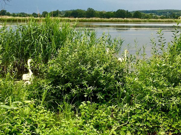 Stork Nature Nature Growth Grass Lake Green Color Water Outdoors Beauty In Nature No People Plant Tranquility Day Scenics