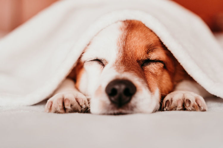 Close-up of dog sleeping on bed