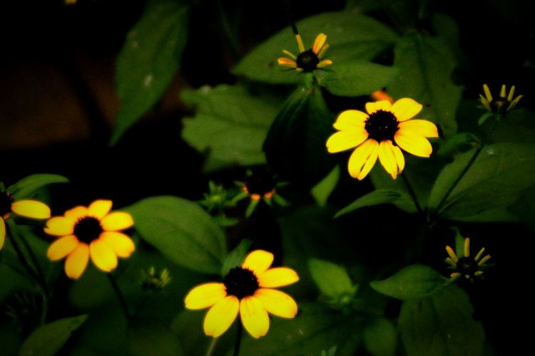 Wild Flower Daisy The Color Yellow Yellow Flower Plants Nature Outdoors Woods Forest World Picture Day The Color Green