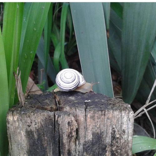 Snail🐌 Nature Day Animal Themes Leaf Mission Pets