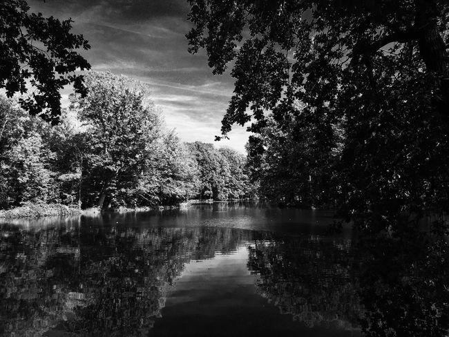 Landscape Velp Vijver En Bos Vijver Landscape Landscape_photography Landscape_Collection