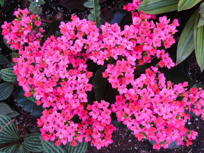 Bright pink flowers 9246532 Neon Life