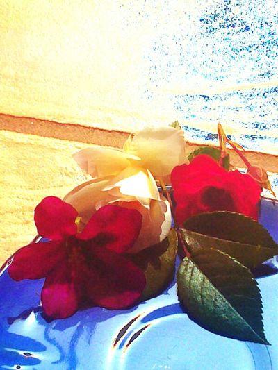 For @pranomthongrod Lovelovelove Flowers Eyeembestedits The @pranomthongrod Hdr_collection Flowers My Working Desk Lovelovelove