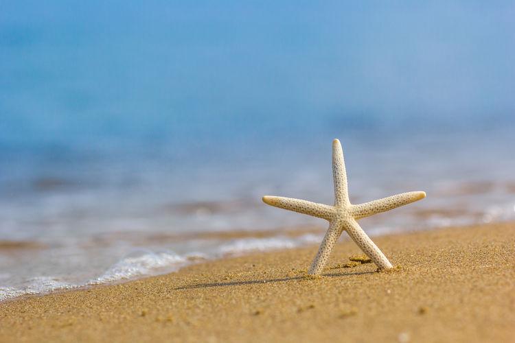 Dead starfish on shore