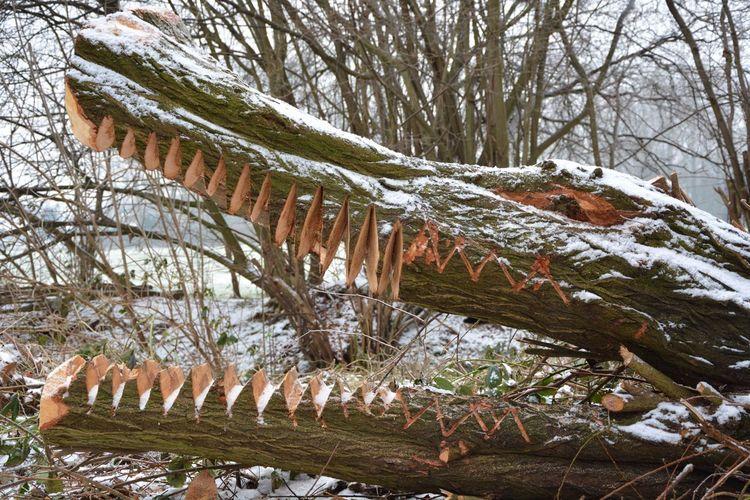 Winter Nature Tree Trunk Crocodille Cold Winter ❄⛄