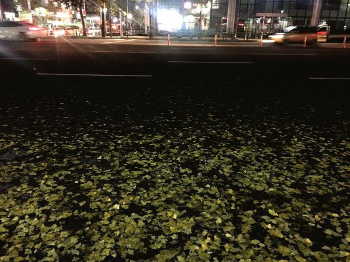 Fallen Leaves EyeEm Korea Fall Beauty Seoul Enjoying Life