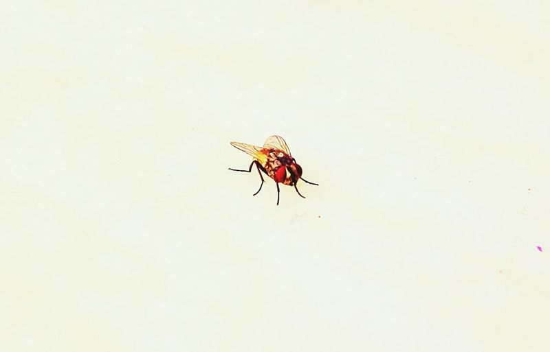 Housefly Taking Photos Check This Out 43 Golden Moments Showcase June Flies Newbie ✌ Feeling Inspired New Learn And Shoot: Simplicity Natural Light Portrait Golden Macro Smartphone Photography Showcase: June New Hobby Trying Macro