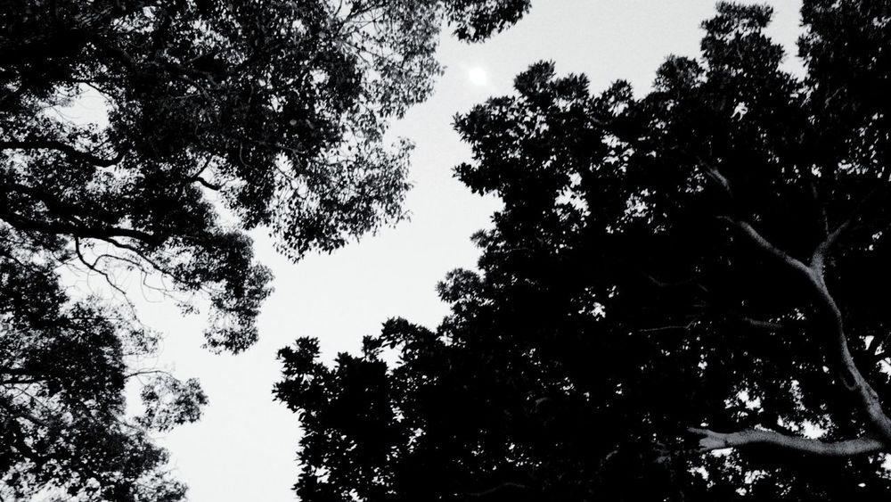 Findthemoon?? Monochrome Traveling Trees Moon