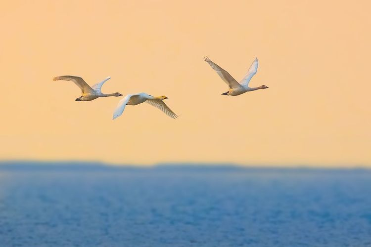 View of birds flying over sea
