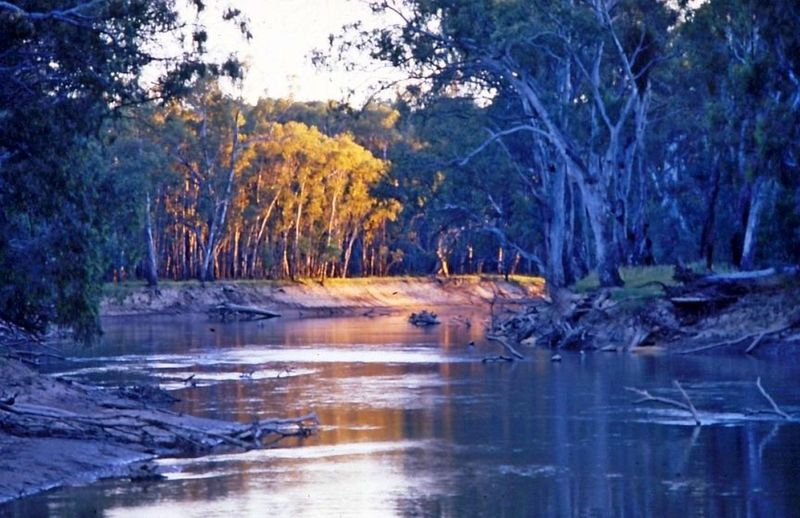 Darling River Beauty In Nature Longest River In Australia Nature No People River Riverbank Scenics Tree