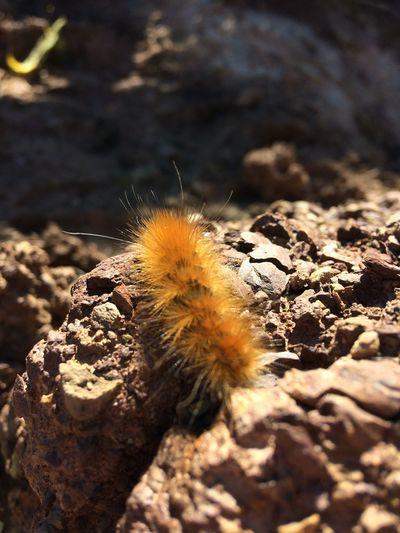 Photography Close-up Outdoors Insect Selective Focus Caterpillar Furry Caterpillar Nature One Animal Bug Great Lighting Nature Photography Natrual Light