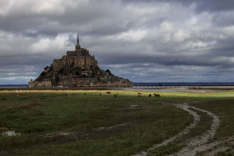Scenic view of the mont saint michel with sheeps on the foreground