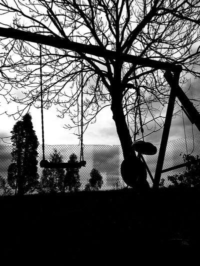 Tree Bird Silhouette Sky