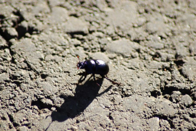 High angle view of insect on land