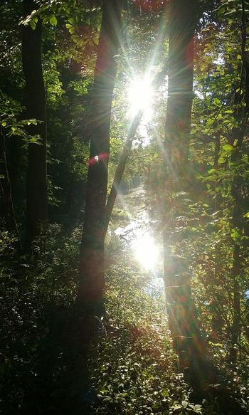 Duke Island Park River View Sunlight Sparkle Beauty In Nature Nature Greenery Outdoors Trishann Artlovelaughter