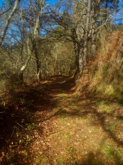 Path to haven Relaxing Taking Photos Forest Ribeira Sacra