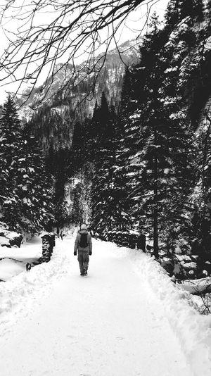 Winter Kościeliskavalley Dolina Kościeliska Poland GalosikFotografę Galosikphotigraphere Nature Forrest EyeEm Best Shots