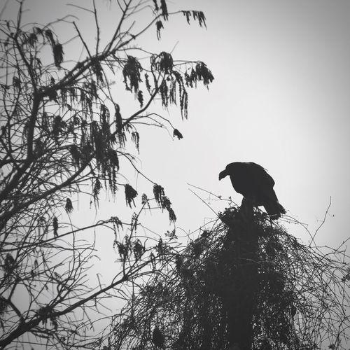Off the clock with a Turkey Hawk. Loxahatchee Wildlife Refuge , Florida The Great Outdoors - 2017 EyeEm Awards