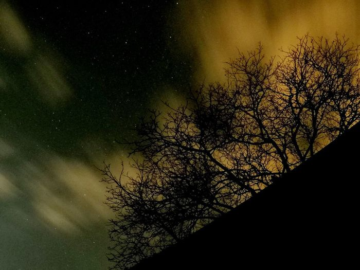 Tree Nature Beauty In Nature Sky Scenics Night Astronomy Branch Bare Tree Star - Space Tranquility No People Idyllic Silhouette Low Angle View Star Field Outdoors Tranquil Scene Galaxy Space