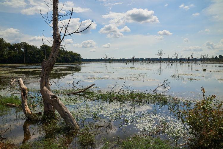 Marshland in