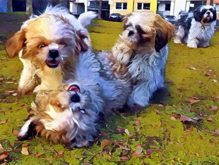 Dogs in a farm