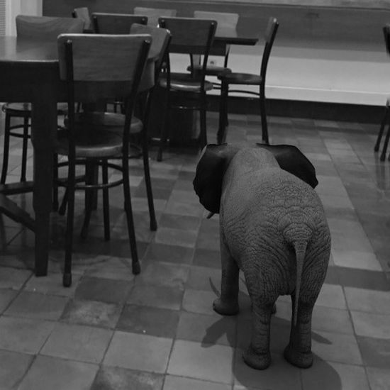 Chairs Photooftheday Seat Chair No People Indoors  Flooring Table Animal Themes One Animal Elephant Restaurant Absence