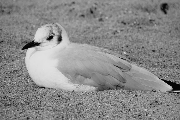 Close-up of seagull on land