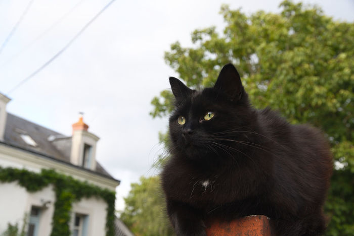 Black Cat Black Cat Is Just So Beautiful. Animal Themes Black Cat Photography Day Domestic Animals Focus On Foreground Full Frame Mammal Nature No People One Animal Outdoors Pets Tree