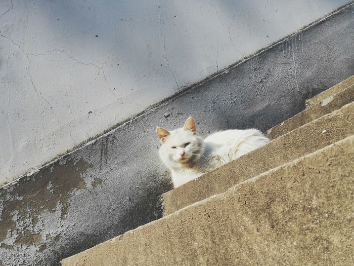 Portrait of cat on wall
