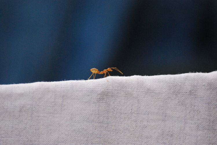 Close-Up Of Insect On Fabric