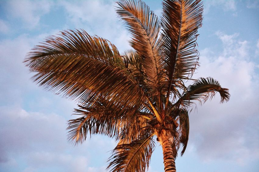 Palm Tree Sky Low Angle View Day Tree Growth Cloud - Sky Palm Frond Nature No People Outdoors Beauty In Nature Nature Las Palmas Sommergefühle Sommergefühle