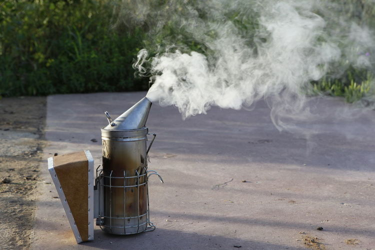 Smoke from bee smoker on footpath against plants