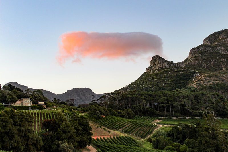Curious cloud formation at sunset on Constantia Glen vineyard in the wine lands of Cape Town, South Africa Constantia South Africa Wine Land Mountain Scenics - Nature Sky Nature Landscape Tranquility Mountain Range Land Day No People Tranquil Scene Plant Winery Vineyard Mountain Peak Grapevine Wine Hills Cape Town Vine Cloud Formations Shape