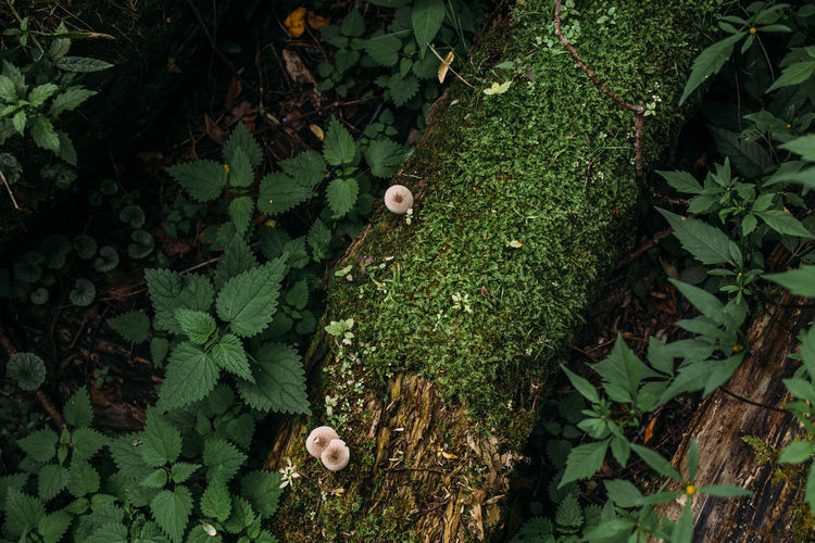 High angle view of a mushroom
