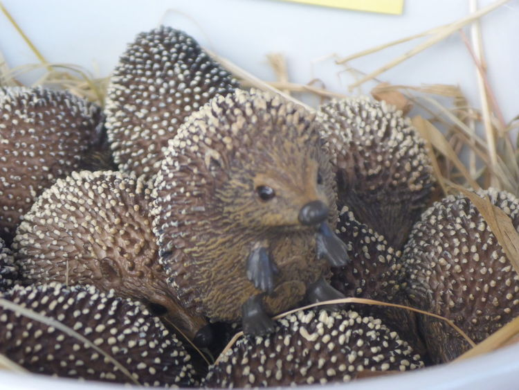Animal Themes Beak Bird Close-up Exotic Pets Focus On Foreground Food Food And Drink Freshness Fruit Hedgehog Indoors  One Animal Softness Wicker