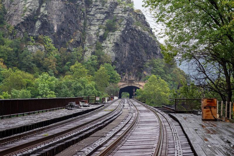 Railway tracks along trees and plants