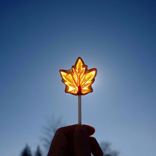 Beautiful sunlight through my favorite lollipop Maple Leaf Maple Leaves Canada Lollipop Lollipops Beautiful Sweet Food Candy Food Delicious Enjoy Lifestyle Nature Photography Nature Beauty In Nature Leaf Trees Silhoutte Photography Silhouette Sunlight Blue Sky Human Hand Real People Holding Personal Perspective Blue Close-up Sky
