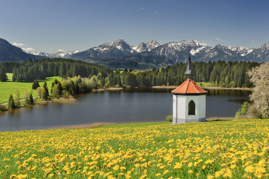idyllic scene with mountain range and chapel over lake in region Allgäu, Bavaria, nearby city Füssen Allgäu Bavaria Chapel Rural Scenic Tranquility Alps Beauty In Nature Beauty In Nature Flower Forggensee Lake Landscape Mountain Mountain Range Nature No People Outdoors Rural Landscape Rural Scene Scenics Spring Springtime Tranquil Scene Water